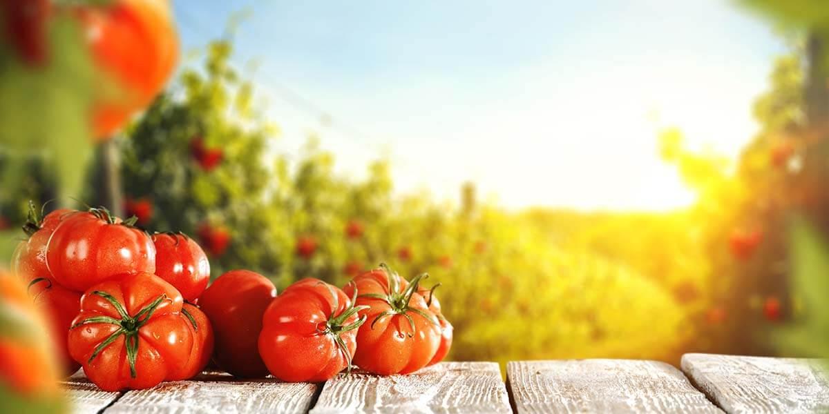 domates yemek
